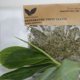 Thebu (Costus speciosus)