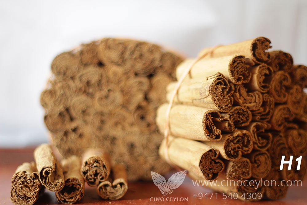 cinnamon H1 wholesale